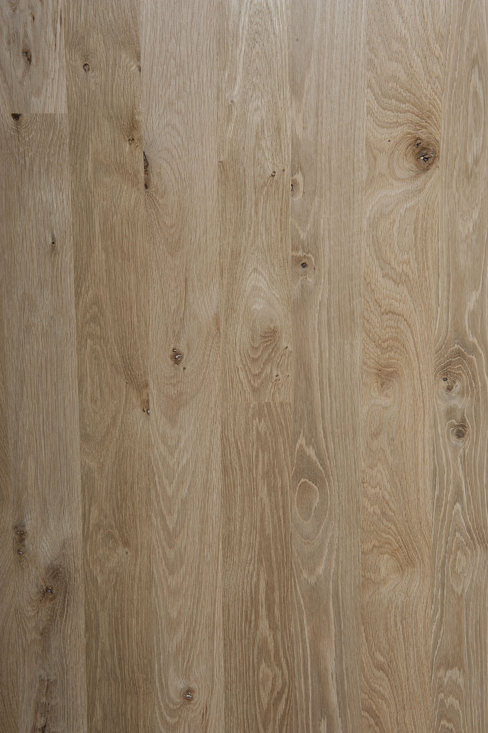 Northern white oak species page for White oak flooring