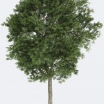 Northern Ash Species Page