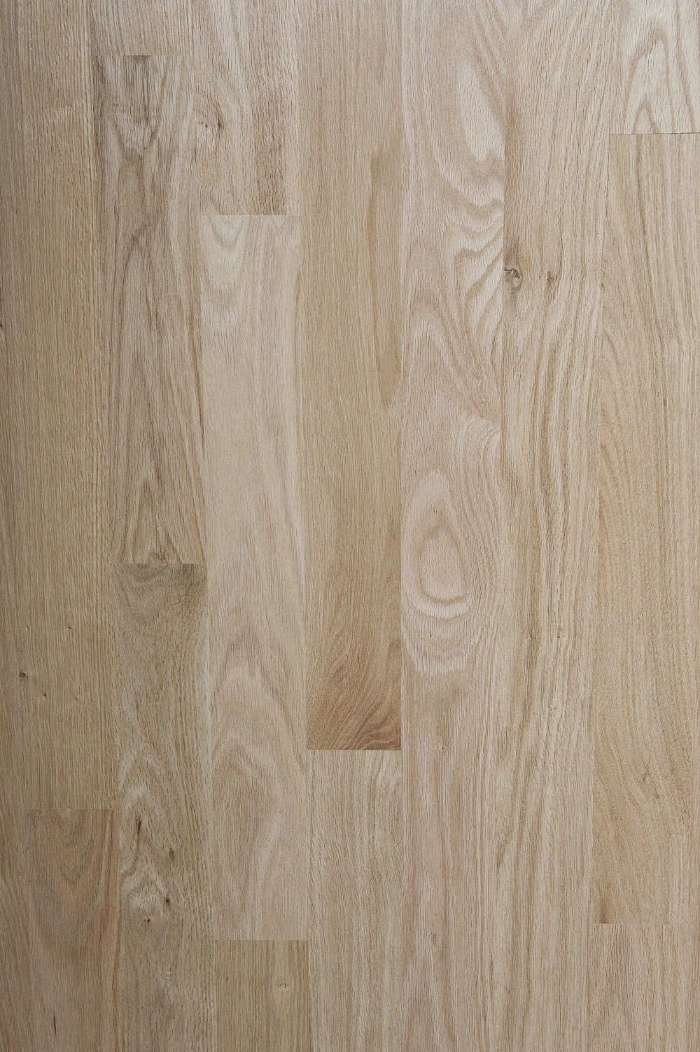 Northern Red Oak Species Page